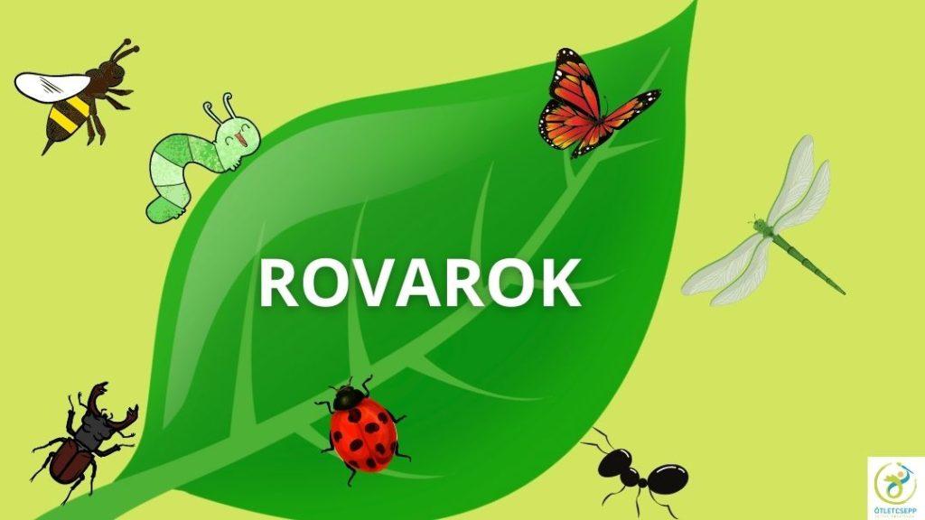 zöld levélen lepke, hernyó, katica, szitakötő, méh, hangya, szarvasbogár